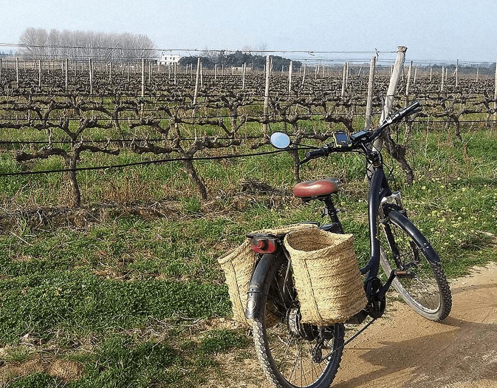visita celler de vi i bicicleta